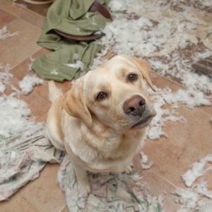 Собаку заводить не стоит