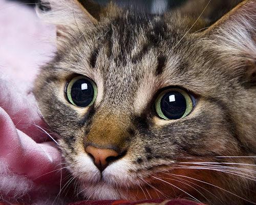 Приметы и суеверия с кошками