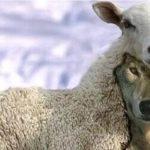 Волк в овечьей шкуре — кто это? Как вычислить. Понятие. Значение фразеологизма