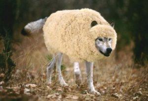 Волк в овечьей шкуре - кто это