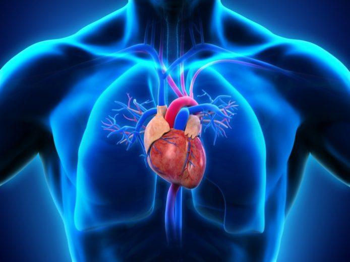 Продукты для сердца — список самой полезной еды для сердца