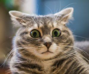 Что не любят кошки, а порой и вовсе ненавидят