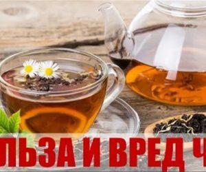 Польза и вред чая. Черного, зеленого, красного, желтого и белого