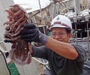 Таракан размером с кота был пойман в Индонезии