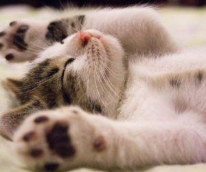 Чем можно заразиться от кошек. Какими болезнями?