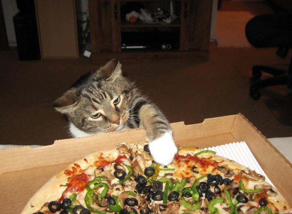 почему кошка