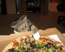 Почему кошка плохо себя ведет? В чем причины такого поведения и непослушания?