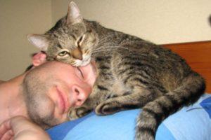 Кошка признается человеку в любви