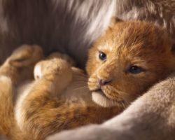 Смотреть трейлер нового Короля Льва, который установил рекорд по просмотрам - 224,6 миллиона за сутки!