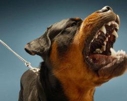 Самые опасные породы собак. Стоит ли заводить?