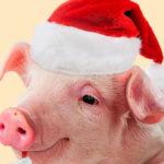 Как встречать 2019 год Свиньи правильно: новогодние приметы на удачу и деньги