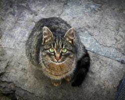 Почему нельзя смотреть кошке в глаза? Мистические и научные объяснения этому суеверию