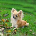 Самые агрессивные породы собак. Топ — 10