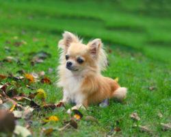 Самые агрессивные породы собак. Топ - 10