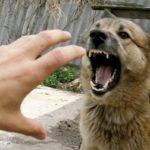 Почему собаку нельзя бить рукой: ответы опытных экспертов