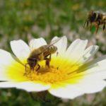 Приметы: Залетели в дом пчела, оса или шмель. К чему это и что сулит?