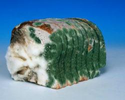 Если съесть хлеб с плесенью: что будет? Так можно есть или нельзя? Какой вред для здоровья?