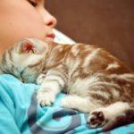 Почему кошки ложатся на больное место человека. Зачем они это делают?
