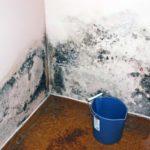 Плесень на стенах: чем опасна и причины появления, как избавиться. Вред для владельцев квартиры или дома