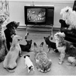 Что видят собаки и кошки в телевизоре?