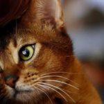 Как кошки очищают жизнь человека от негативной энергии