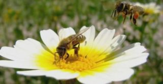 Залетели в дом пчела