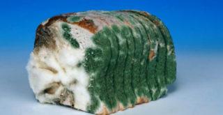 если съесть хлеб с плесенью